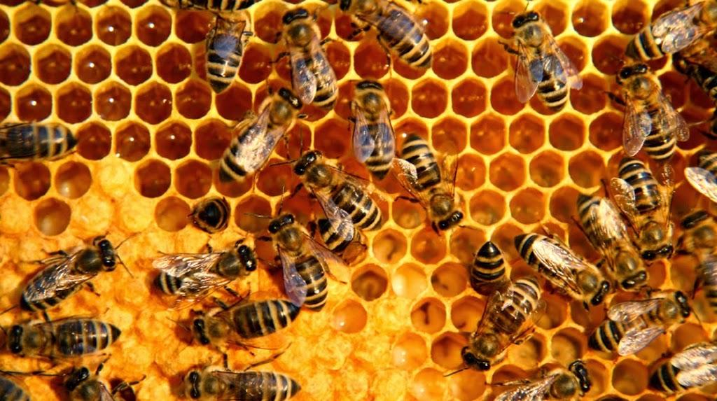 Lebah Membuat Sarang, sumber: 4muda